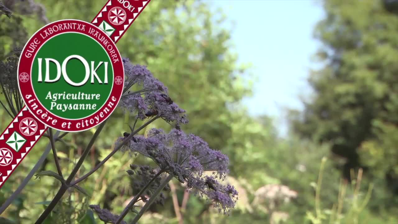 Idoki : Aitor De Portuondo,  senda belar eta landare aromatiko ekoizle