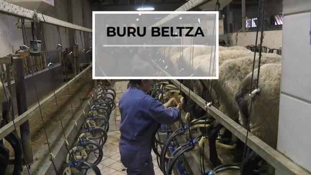 BURU BELTZA: Balorizazioa