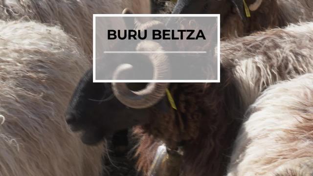 BURU BELTZA: Enplegua
