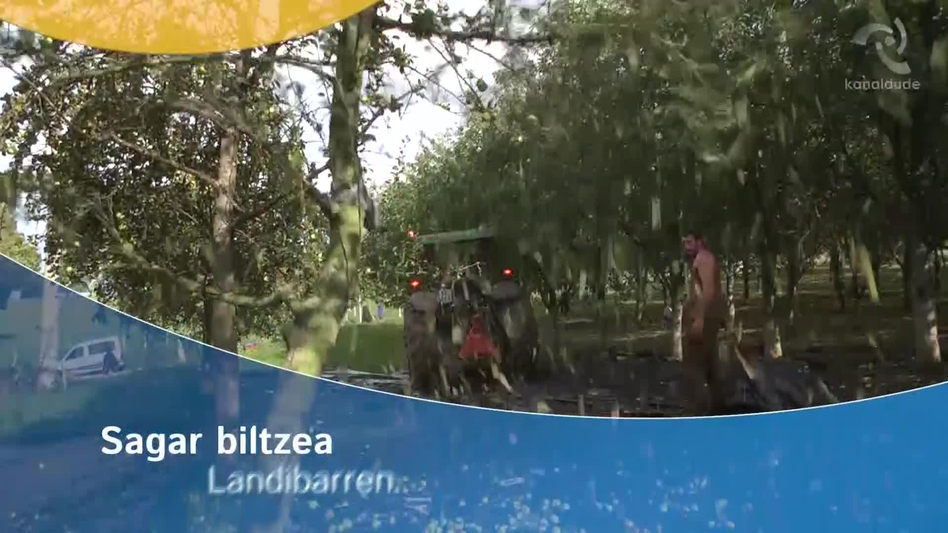 Sagar biltzea Landibarren
