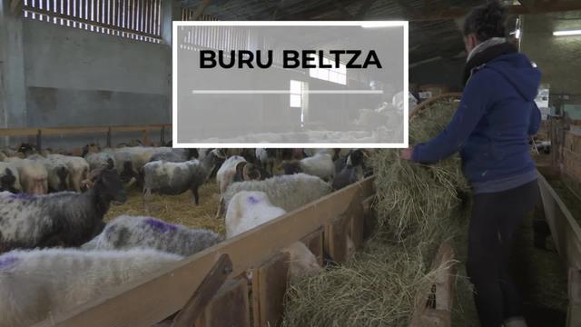BURU BELTZA: Arraza